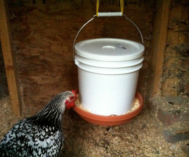 Homemade Gravity Chicken Feeder