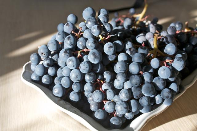 Agria grape