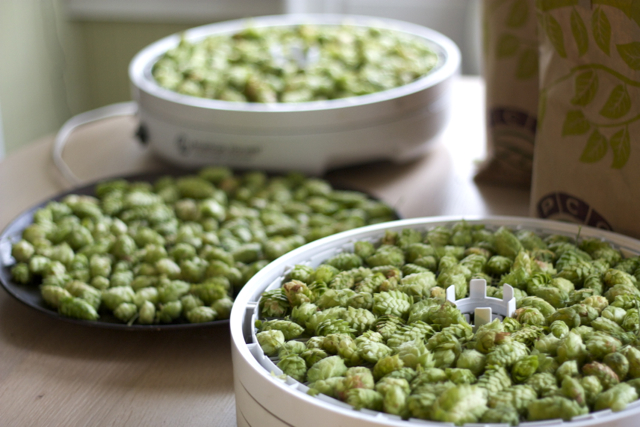 Dehydrating hops for beer
