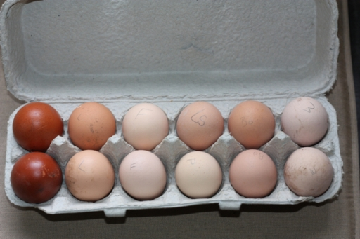 The dozen fertile eggs from The Bradley Farm