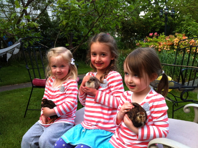 My nieces Kinsey, Evy, and Clara, each with her own chick
