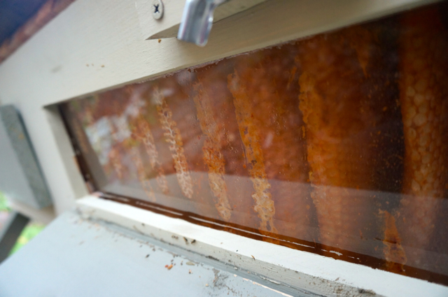 Bright orange combs, most firmly attached to the window