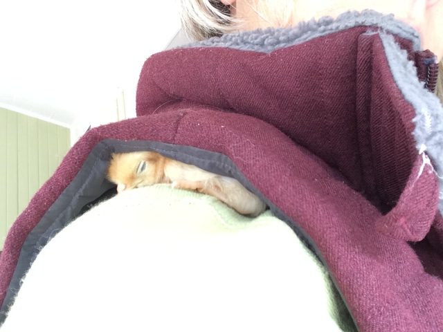 Chicken, on my shoulder, makes me haa-ppy...