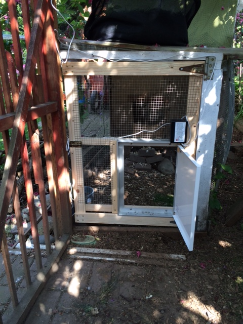 New coop door with Pullet-Shut installed