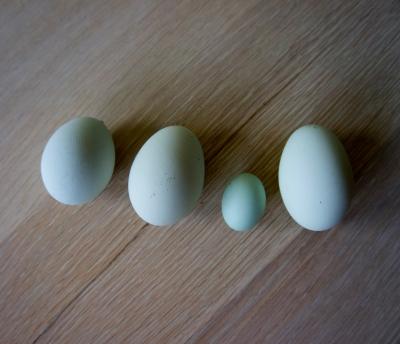 wind egg, cock egg, dwarf egg